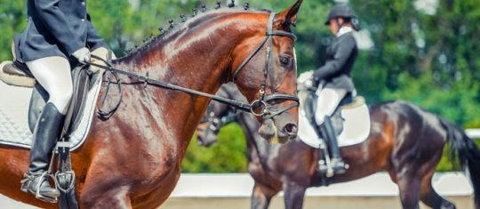 Management cheval